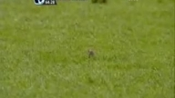 mouse on old trafford pitch 2