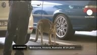 Police chase wild kangaroo in airport